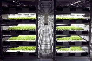 Spread-Vegetable-Factory-Techfoodmagazine