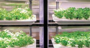 Infarm, granjas hidropónicas modulares para cultivar vegetales en cualquier espacio