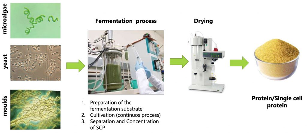 Fully Mimic - Fermentacion